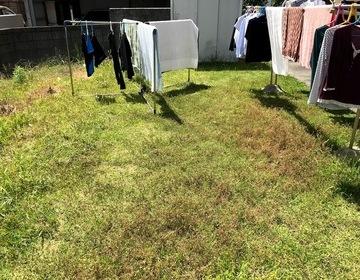 草の生えた庭 何とか出来ませんか!